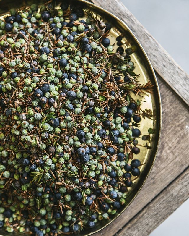 Hepple Gin combines a botanical mix of 3 juniper berries. We use green, unripe juniper berries from the Hepple estate adding a fresh 'green' taste. ⠀⠀⠀⠀⠀⠀⠀⠀⠀--------⠀⠀⠀⠀⠀⠀⠀⠀⠀The Macedonian juniper provides the classic juniper punch whereas the Italian juniper lends a sweetness and lighter floral element, a daintier offering.⠀⠀⠀⠀⠀⠀⠀⠀⠀-------⠀⠀⠀⠀⠀⠀⠀⠀⠀#hepplegin #juniper #distillery #science #nature #balance #wild #botanicals #craft #bartenders #tripletechnique #flavour #gin #heppleing #juniper #northumberland #hepple #local #environment #sustainability #green #ecofriendly - from Instagram