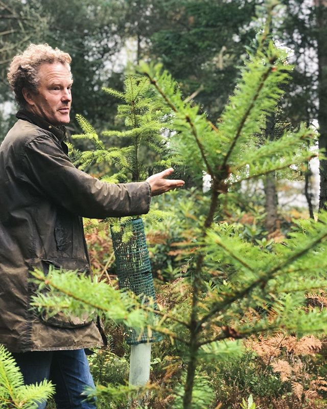 It might be time to take down the Christmas tree at home, but at Hepple, we are busy tending to our young Douglas Fir trees, maintaining a positive harvesting process to keep our spirits fresh, clean and alive 🌲.------ #propagation #ecofriendly #trees #hepplegin #juniper #distillery #science #nature #balance #wild #botanicals #craft #harvesting #land #northumberland #hepple #local #environment #sustainability #green #juniper #douglasfir - from Instagram