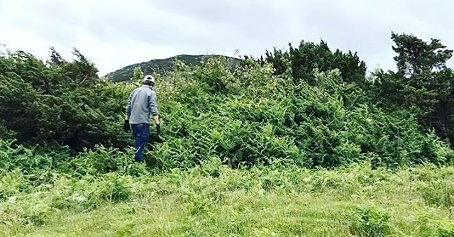 Bracken removal from some of our juniper. Warmer winters are not hitting the bracken back as much as they used to, and can smother juniper as it can grow more than 6 foot tall!•But the question is...who do you think worked harder @hepple_chris (left) or @walter_at_hepple (right)? ••#hepple #gin #juniper #botanicals #water #clean #hepplegin #heppledistillery #planting #sustainability #northumberland #land #nature #environment #sustainable #ecofriendly #wild #local #ginlovers #martinilovers #ginfluencers #distilling #distillery #rewilding  #summer #spring - from Instagram
